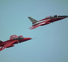 GNAT pair by Andy Jordan