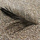 Sandy Black Feather by KimSha
