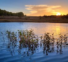 Sunset Gathering by Bob Larson