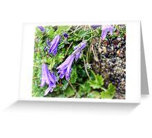 Bedraggled Blues  Greeting Card
