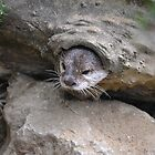 Otter in Log by janlou
