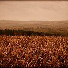 A Corn Field on a Hazy Fall Day ~ Vintage Photography by Chantal PhotoPix
