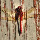 Meadowhawk Red on Aged Wood by shutterbug2010