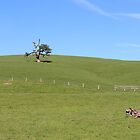 Foothills by Chris Kean