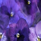 """""""Purple Pansy iPhone Cover..."""" by Rosehaven"""