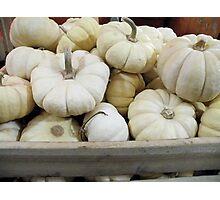 White Pumpkins Photographic Print