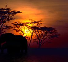 African Nights by Stuffy1940