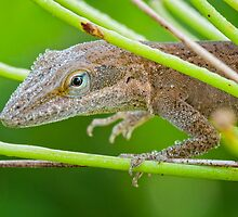 Dew Drenched Lizard on a Foggy Morning by Bonnie T.  Barry
