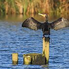 Drying Out the Flying Tackle by Mark Hughes