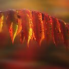 Indian Summer by Wayne King