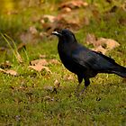 Nevermore by marcum502
