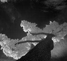white tree by bogfl