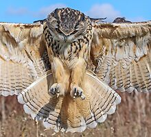 Watch Out Mouse, Here I Come! by Mark Hughes
