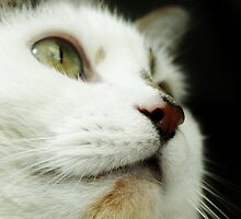 Up Close & Purrsonal by Ladymoose