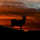 Red Deer Sunset by Fraser Ross