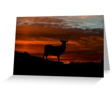 Red Deer Sunset Greeting Card