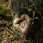 Heart of Oak by Sue Robinson