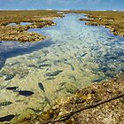 Rock Pools by Steve Oldham