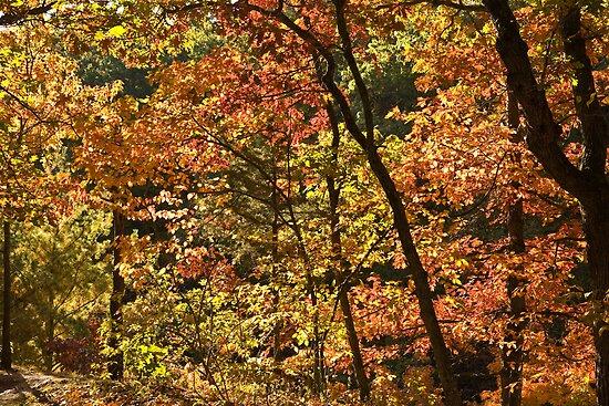 Autumn Collage by Adam Bykowski