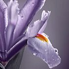 """Elegant Iris IPhone Cover..."" by Rosehaven"
