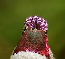 Head with hummingbird crown by loiteke