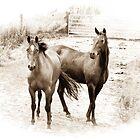Horses in Sepia by Deborah Clearwater