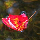 Leaf on the Water 19 by ChuckBuckner