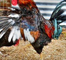 Kung Fu Rooster by Bami