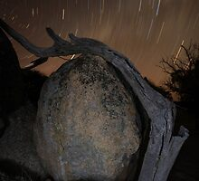 Sculptures & Stars by JFStockton