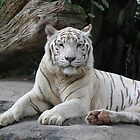 White Tiger 3 by Leanne Allen
