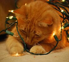 Christmas Kitty is Tangled by Lisa Hayes