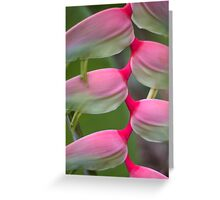 Exotic Charmer Greeting Card