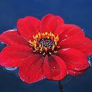 Floaty Flower by Anthony Thomas