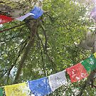 Sunlight, silver birch and prayer flags by Laura Potter-Dunn
