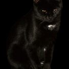 Black Cat by ArtBee
