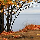 Autumn sliced with a tear by TerrillWelch