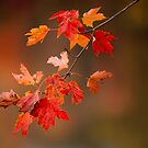 Fall Color Splash by photosbytony