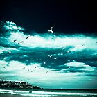 Birds at Bondi Beach by Andrew Wilson