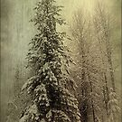 Winter by Annie Lemay  Photography