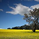 Tree in a Canola Field by kcy011