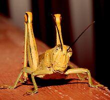 Grasshopper by Maree Costello