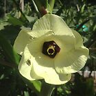 "Giant Yellow Hibiscus 'Old Yella' by Christine ""Xine"" Segalas"