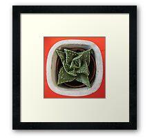 Lithops? - no, it is Faucaria felina - Tiger jaws Framed Print