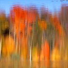 Fall Reflections by Eva Kato