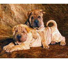 Sharpei Dogs in Impasto Photographic Print