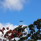 As the season flies by (&#x27;Leaf&#x27;ing below a jet plane) by Mui-Ling Teh