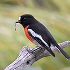 ~ Scarlet Robin with Lunch ~ by Leeo