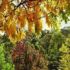 Autumn leaves on a wisteria by Greta van der Rol