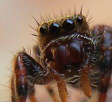 Spider by dottie9925