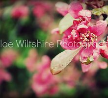 Floral Composure by PhotographyCW
